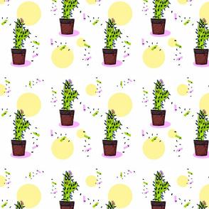 Little cactus