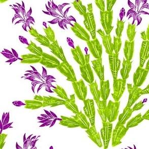 fresh blooming Christmas cactus damask