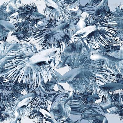 Blue Bettas Monochrome Challenge