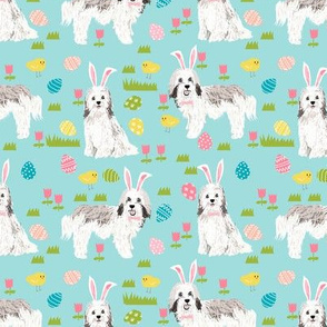 havanese easter dog breed fabric spring easter bunny pure bred blue
