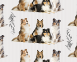 Rshelties-and-florish_thumb
