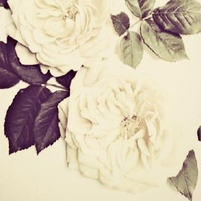 Tinted Roses