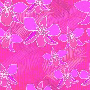 Orchids in magenta