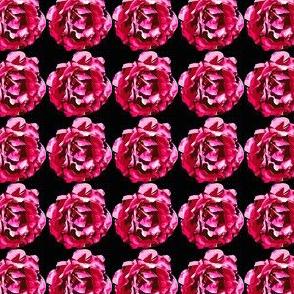 Lady Floral