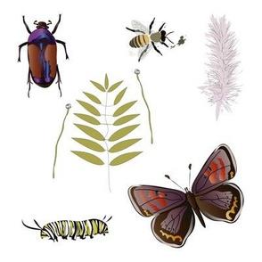 Lepidoptera Sample white