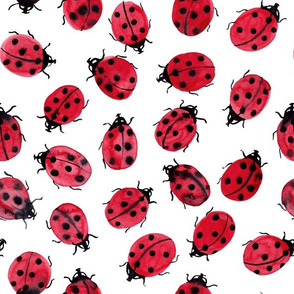 ladybugs on white, watercolor