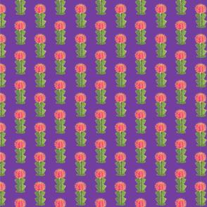 small cactus repeat