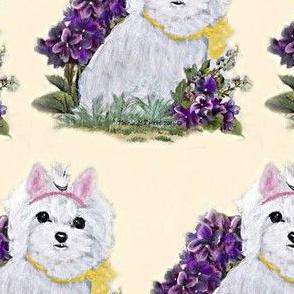 Maltese Bunny