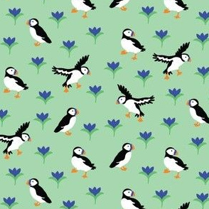 Spring Puffins