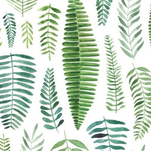 Watercolour Floral Ferns and Leaves