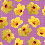 hibiscus spring yellow lavender