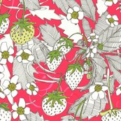 Rstrawberries-st-sf-07032018-sharon-turner-ps11_shop_thumb