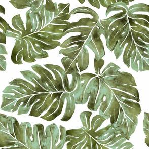 Jungle Monstera olive