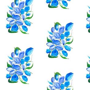 Blue tulipan