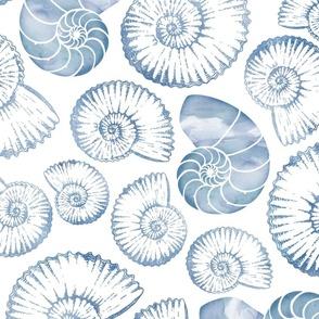 Blue nautilus shells pastel