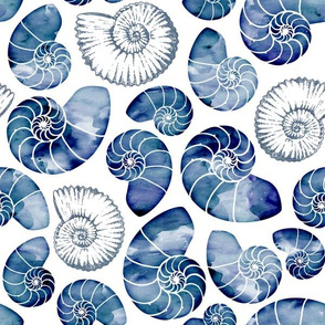 Blue nautilus shells on white