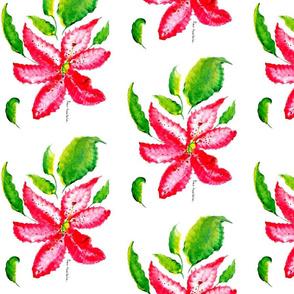 Pink lilium