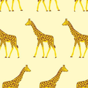 Sunny giraffes