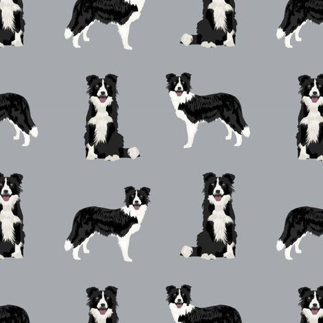 Rz-border-collie-1_shop_preview