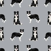 Rz-border-collie-1_shop_thumb