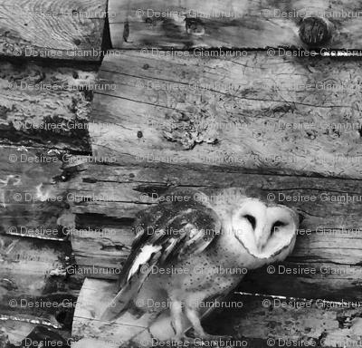 Heart Faced Owl