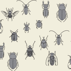 beetles black and grey on natural