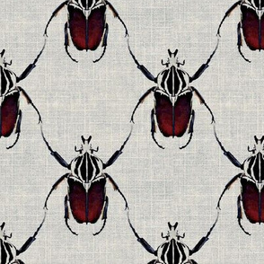 Beetle Lattice on Linen
