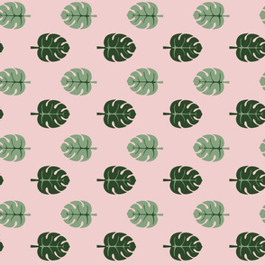 Monstera leaves pink and green