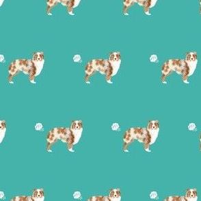 australian shepherd red merle dog fart funny cute dog breed teal