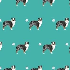 australian shepherd blue merle dog fart funny cute dog breed teal