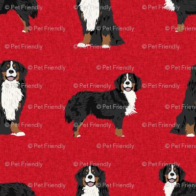 bernese mountain dog pet quilt a coordinate dog fabric