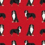 Rbernese-a-dog_shop_thumb
