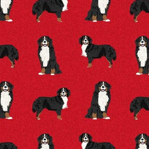 bernese mountain dog pet quilt a coordinate dog fabric