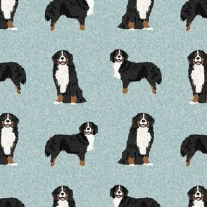 bernese mountain dog pet quilt b coordinate dog fabric