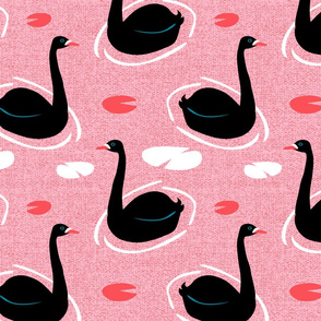 Australian Black Swans by Mount Vic and Me