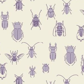 beetles in lavender on natural (small scale)