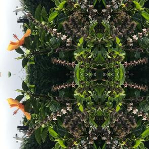 Tucson hibiscus