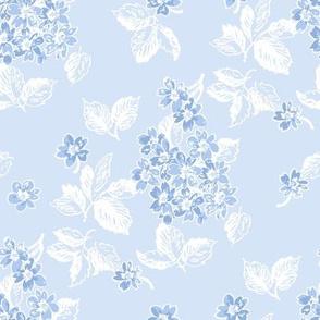 Sloane blueberry