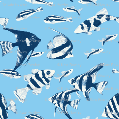 Reef fish (blue)