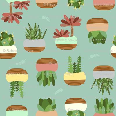 Succulent - Green