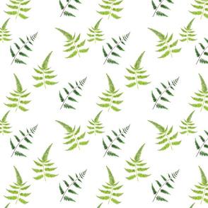 Ferns Pattern V2