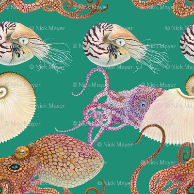 Octopi _ Nautili