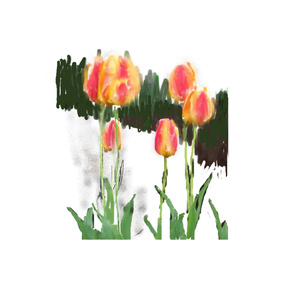 MVB Tulips
