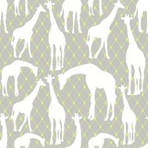White Giraffes on Gray