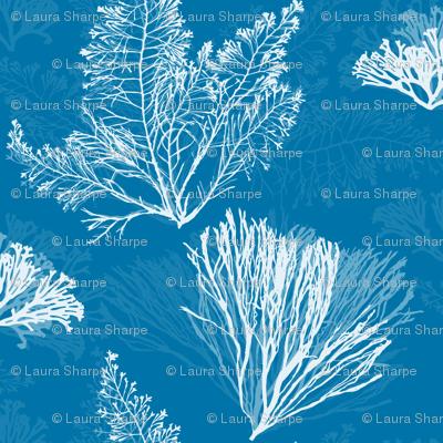 Ocean Flora in Beach Cottage Blue