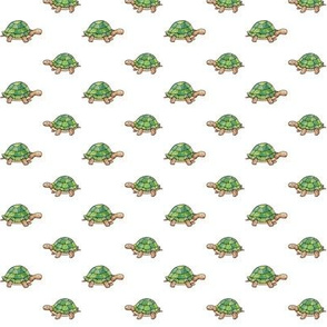 Tiny Tortoises on white