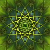 Rgreen-wonder-square-4_shop_thumb