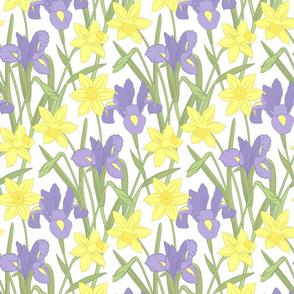 Iris and daffodils