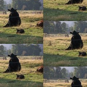 Bull, Sit half drop
