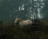 Rrrrrrrrrrshorty-silverlake-wild-stallion_thumb